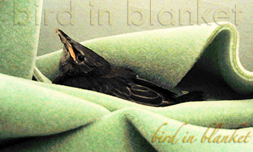 Bird in Blanket