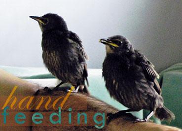 Handfeeding