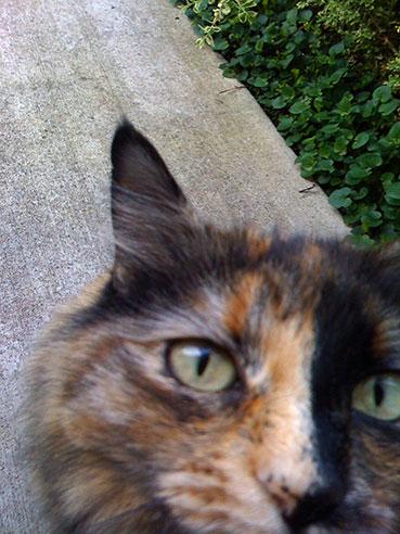 Tinkerbell Closeup